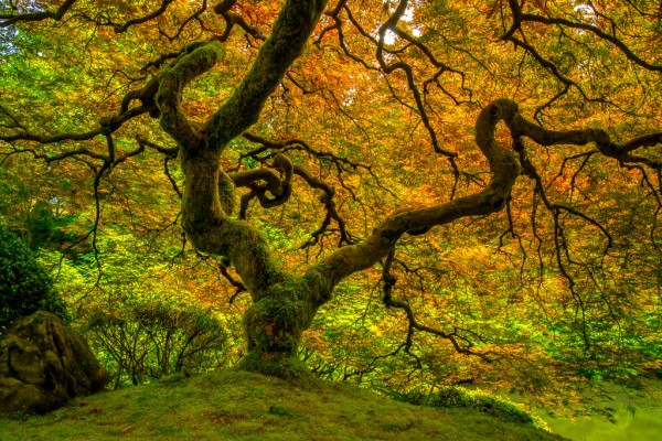 Mossy Tree by Jesse McLaughlin