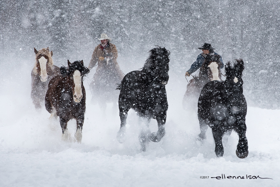 Snow Runners by Ellen Nelson